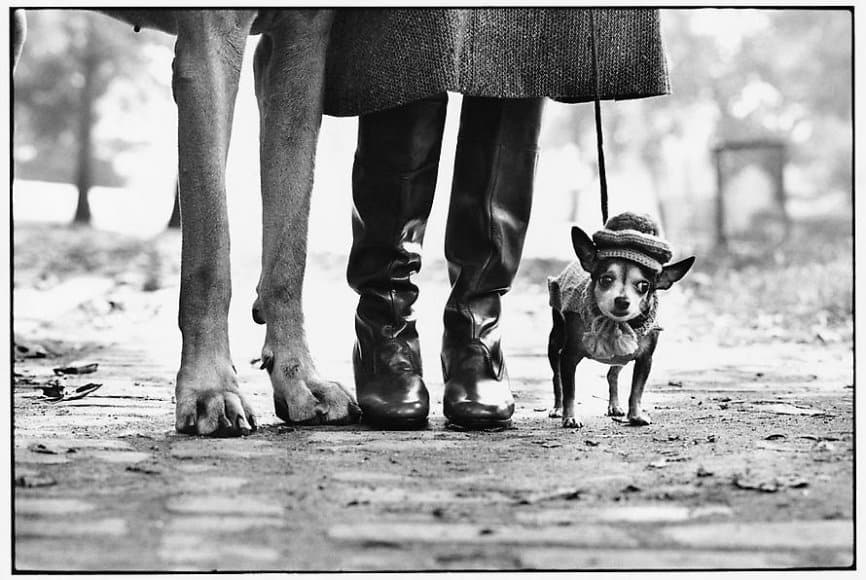 elliott erwitt - dogs