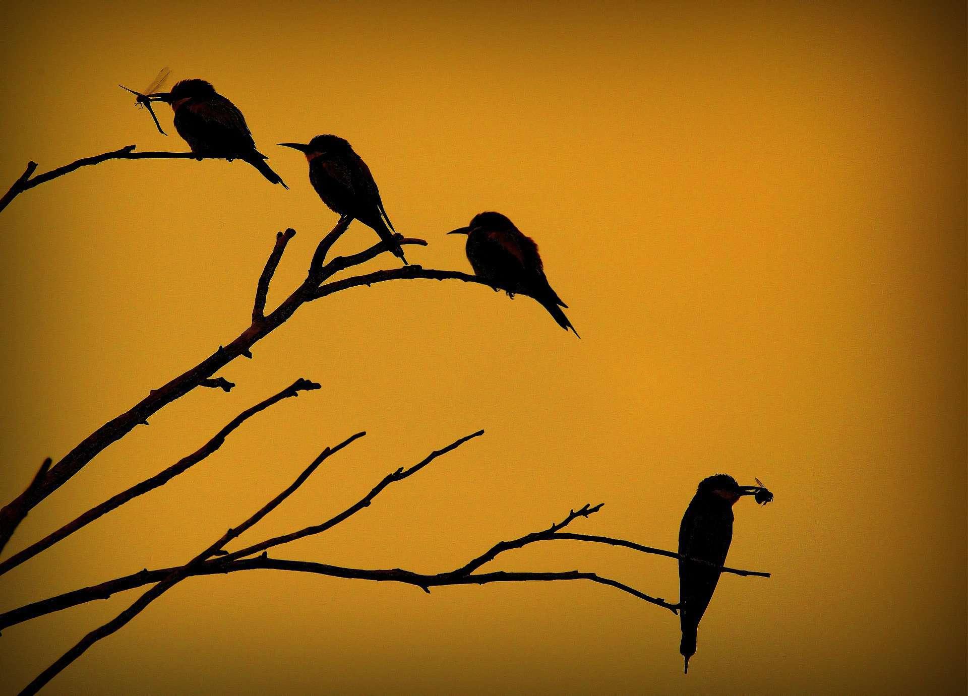 silhouette, silhouette fotografia, controluce