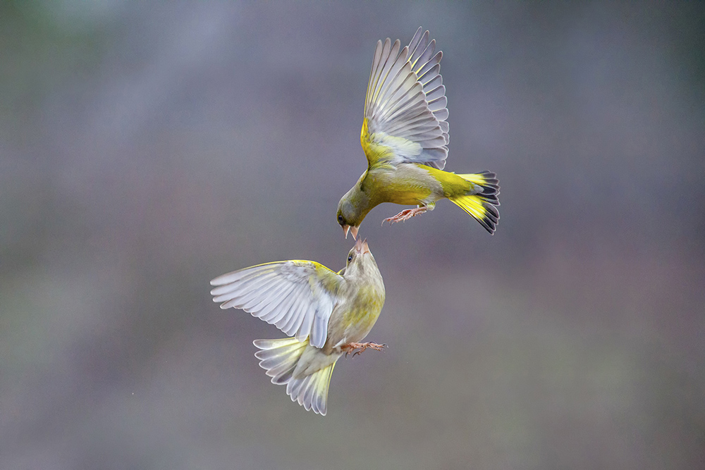 Bird photography by Marco Redaelli