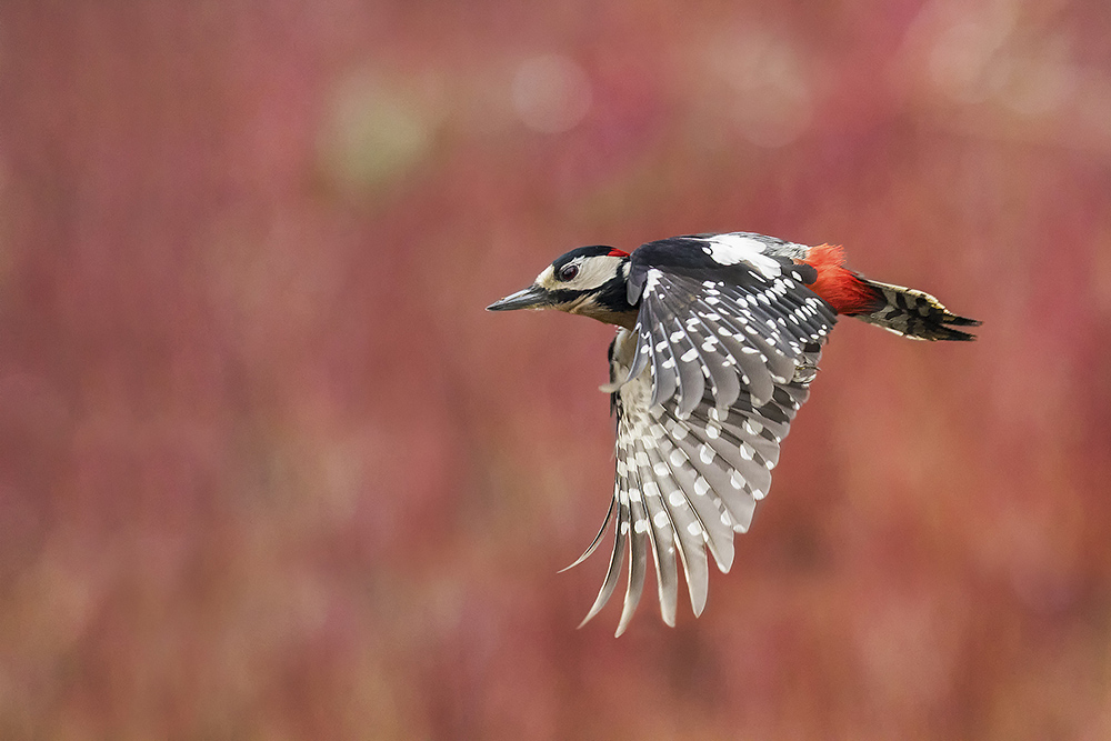 Bird photography by Marco Redaelli