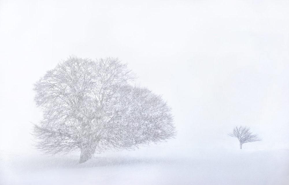 Giovanni Piccinini - un viaggio nella natura attraverso la fotografia