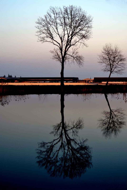 alberi, fotografare alberi