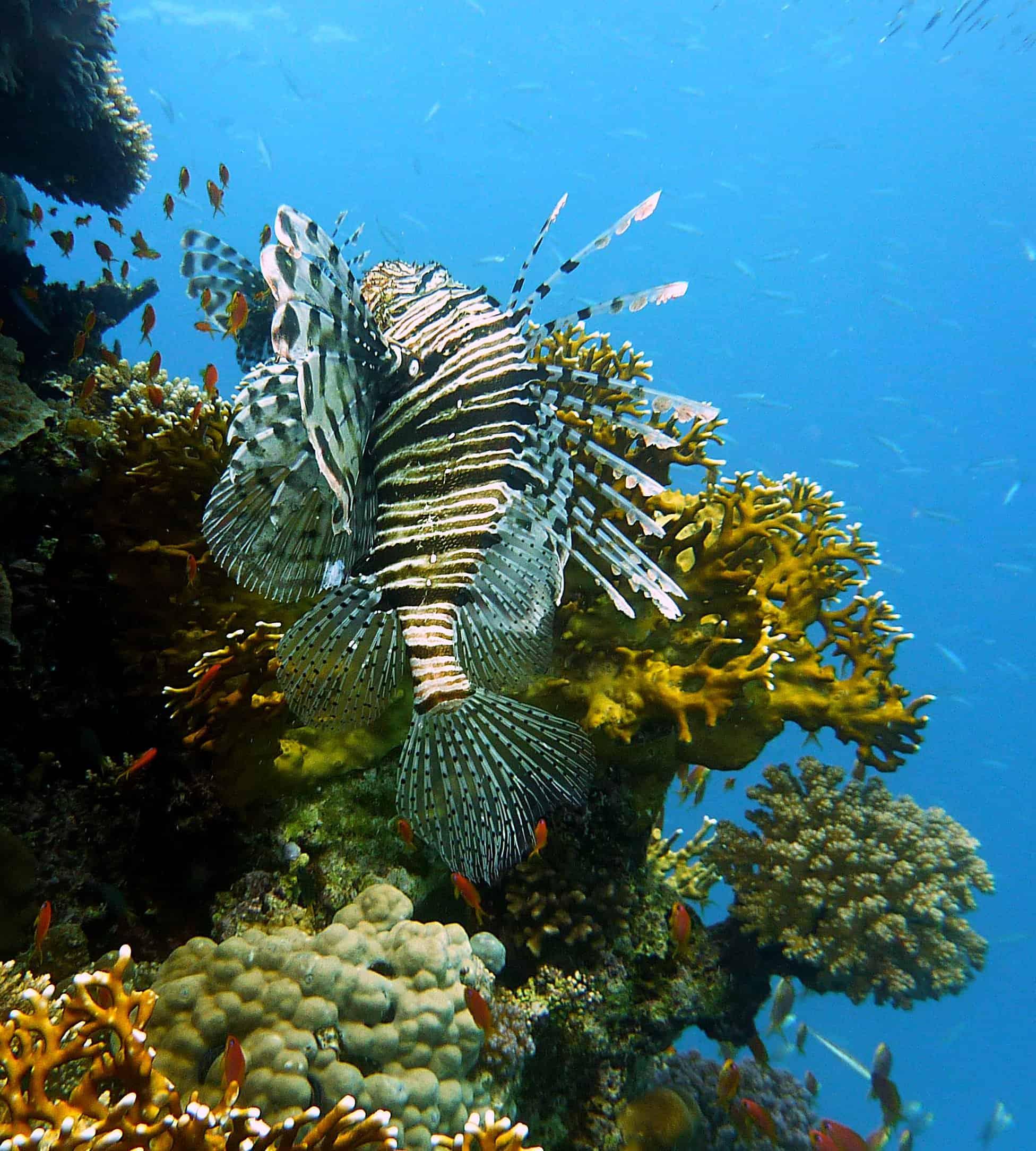 fotocamera subacquea, fotografia subacquea