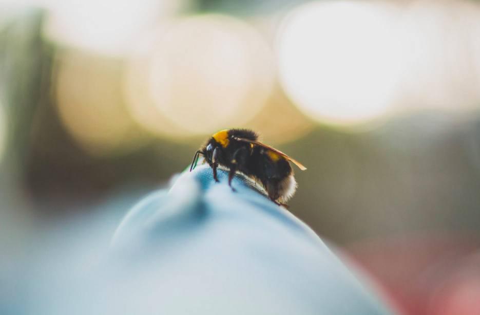 fotografia macro ape
