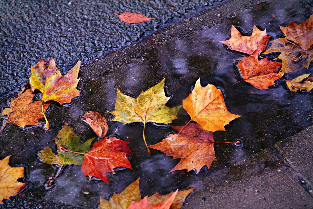 fotografare l'autunno, foglie autunno