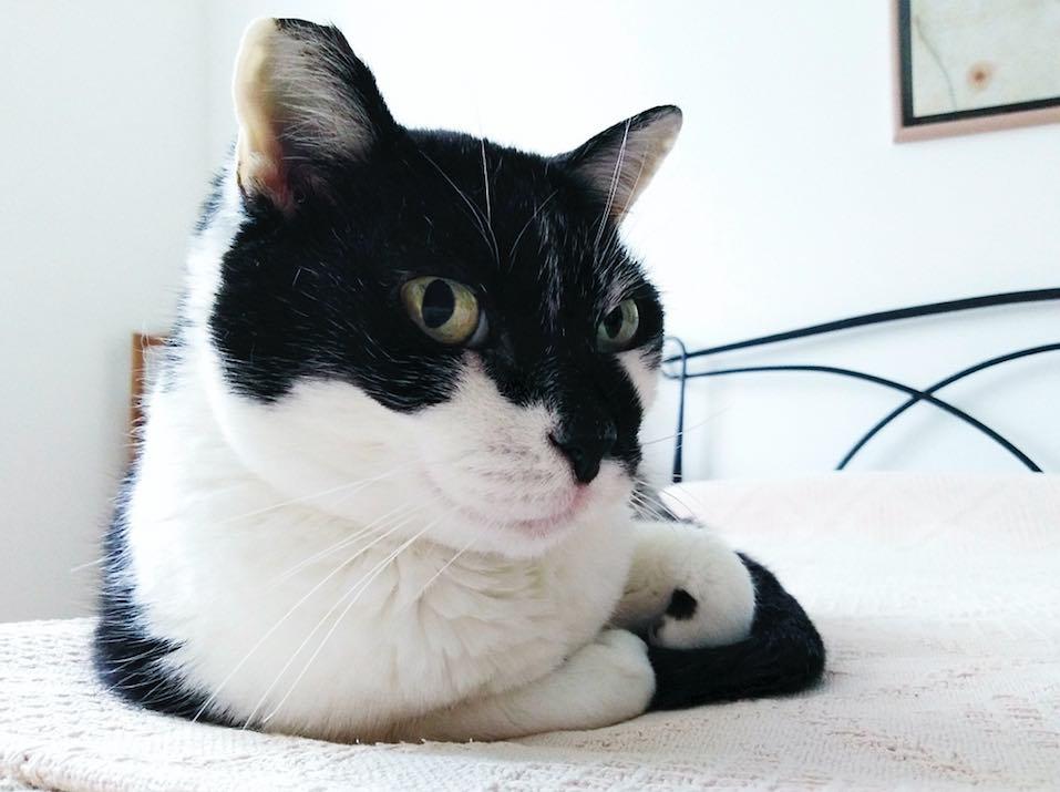 """Le foto dei """"gattini""""...."""