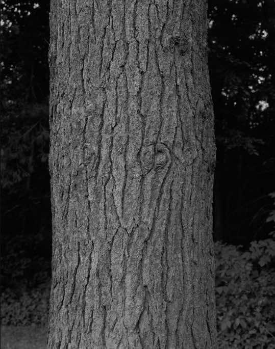 foto alberi shore