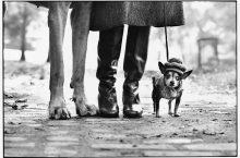ELLIOTT ERWITT: IL FOTOGRAFO DELL'IRONIA