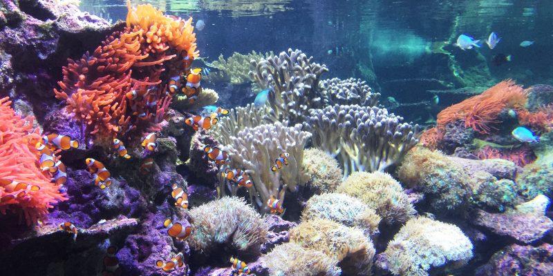 Quale fotocamera subacquea scegliere?