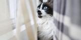 Marianna Zampieri cattura la magia del rapporto tra gatto ed essere umano