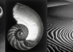 Edward Weston: il Peperone si fa Arte