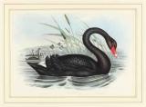 Uno zoo a colori: Dal Cigno Nero alla Mucca Viola