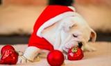 Le foto di Natale: consigli e idee per i tuoi ricordi natalizi