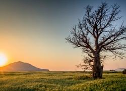 Golden hour: pianifica i tuoi scatti e aggiungi magia alle tue foto