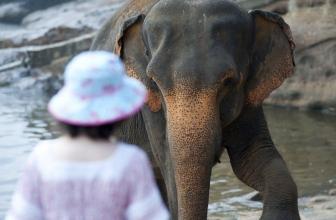 Di Elefanti e Fotografia