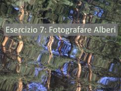 Esercizio Fotografico 7: Scatena La Tua Creatività con Gli Alberi