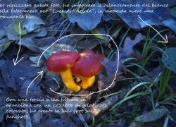 Nonsolocolori. Un progetto per le foto d'autunno